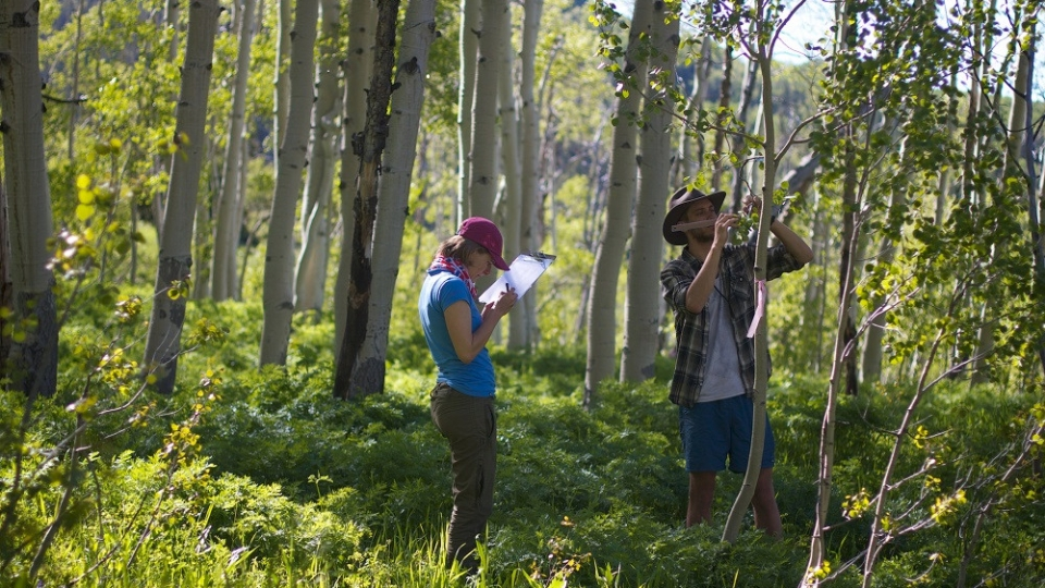PG6  Richard Forbes and Rozalia Kapas measure aspen leaves near Gothic.  Photo by Benjamin Blonder, PhD.-3