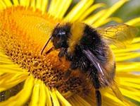 digital_bees[1]