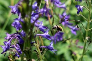 09 - Bee