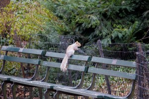 New-York-City-Central-Park-squirrel-lg