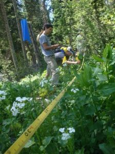 Researchers collecting data in the forest. Photo from RMBL Archives